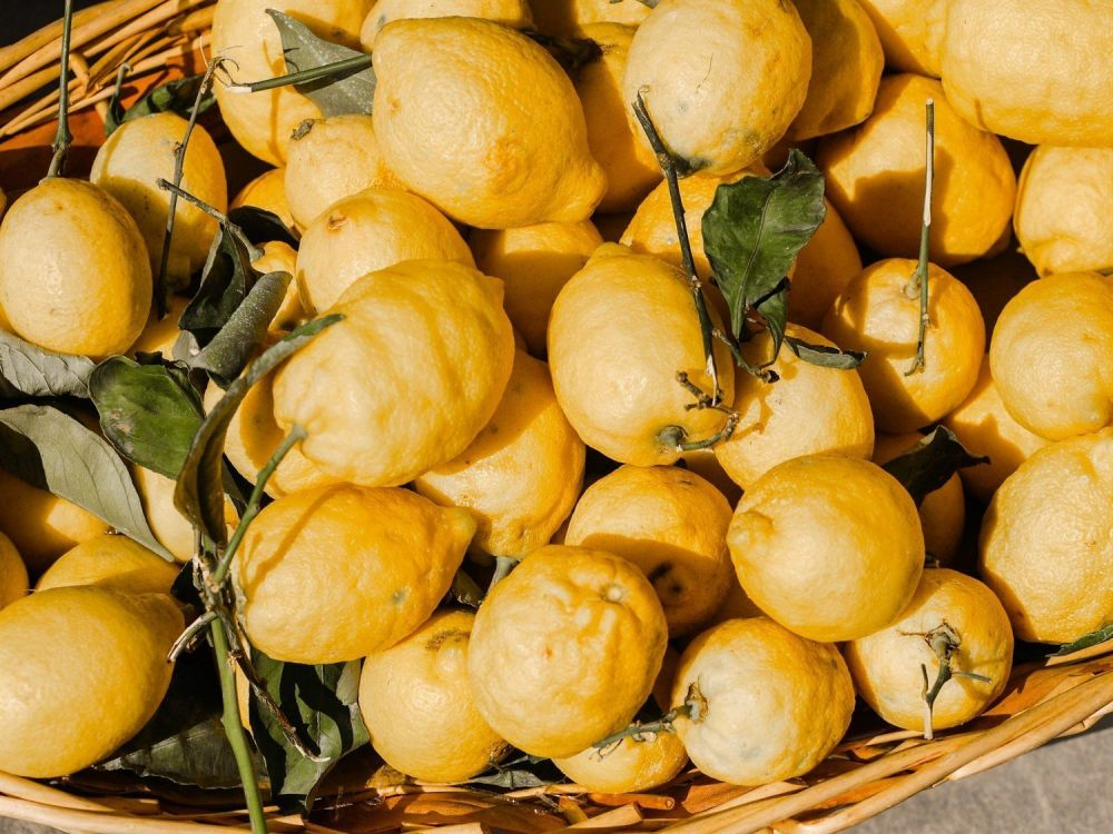 Il vero segreto del limoncello in costiera amalfitana