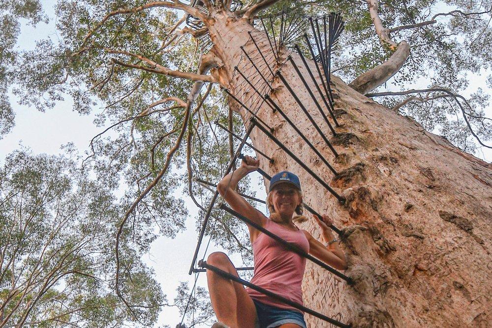 Anna Disegna di La tartaruga volante al Tree Top Walk, in Western Australia