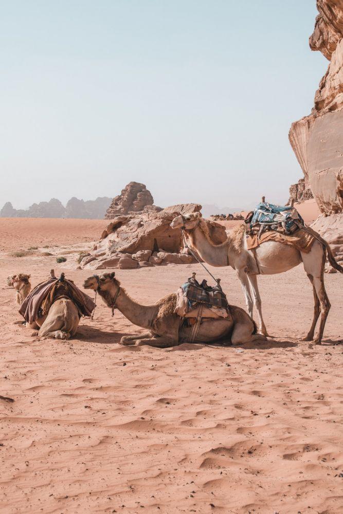 Deserto giordano, foto Alex Azabache
