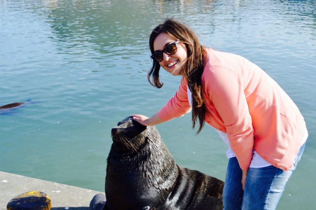 Leone marino a Hout Bay di Città del Capo