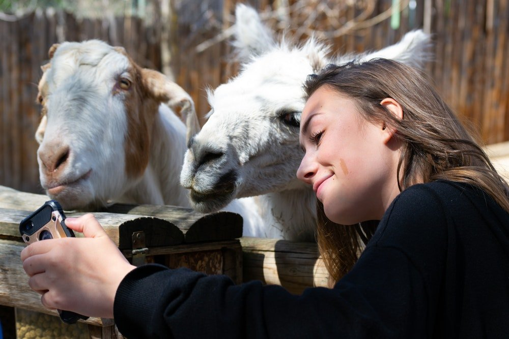 Selfie di influencer con capre, foto Brett Sayles